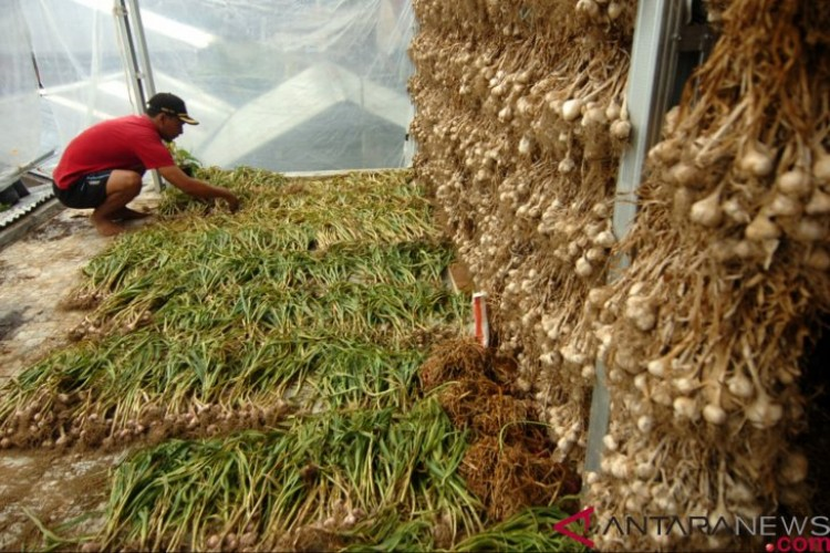 Bulog Tunggu Surat Penugasan Menteri BUMN Soal Impor Bawang Putih
