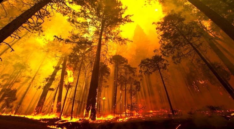 LAMPUNG POST | Satgas Terus Hentikan Kebakaran Hutan di Sumatera dan Kalimantan