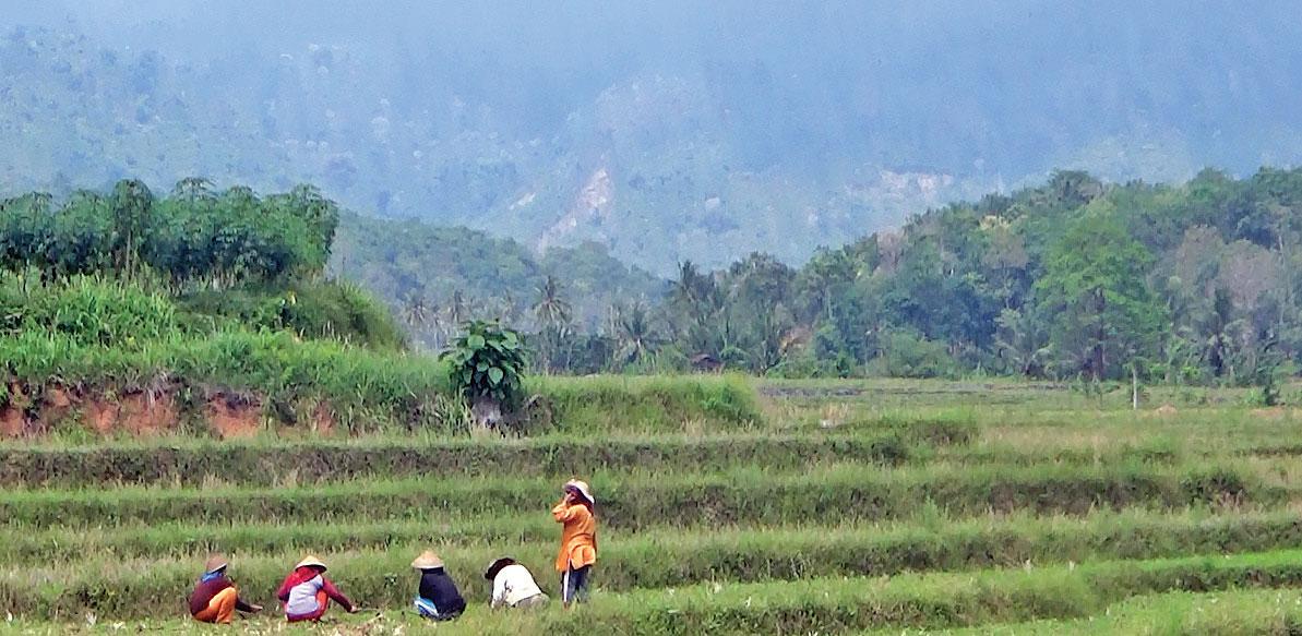 LAMPUNG POST | Gununggijul, Desa Nan Asri di Kaki Bukit Barisan