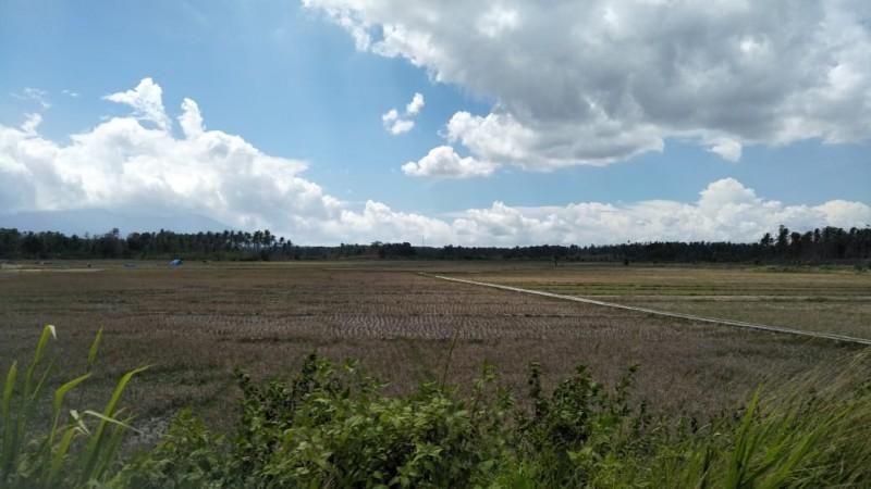 Curah Hujan Belum Stabil, Ratusan Hektar Sawah Tadah Hujan Masih Kering