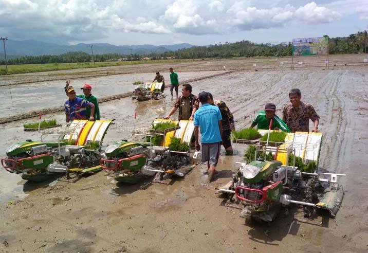 Pesawaran Tanam Perdana Padi di Lahan Cetak Sawah Seluas 390 Hektare