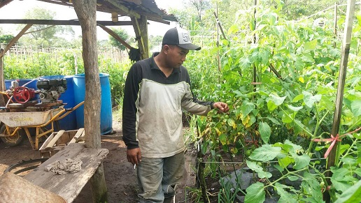 LAMPUNG POST | Petani Sayur di Lambar Keluhkan Biaya Perawatan Ekstra