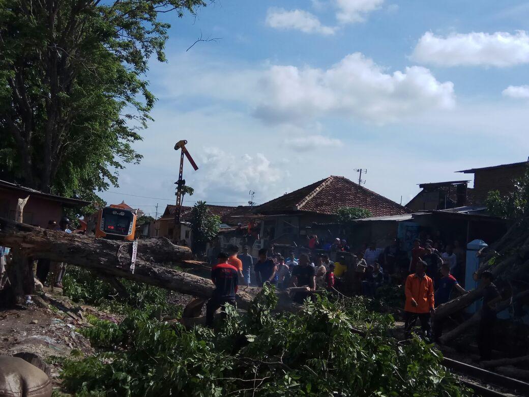 LAMPUNG POST | Video: Pohon Tumbang Menutupi Jalur Rel Kereta Api di Jalan Pajajaran