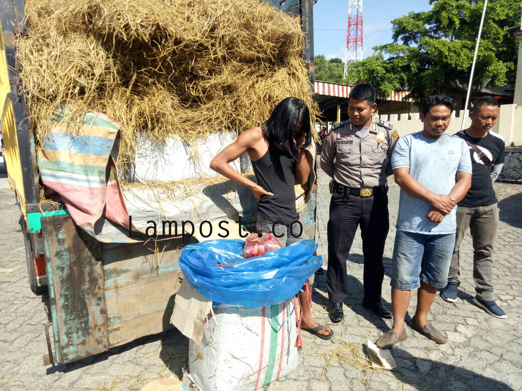 Penyelundupan 3 Ton Daging Celeng dalam Karung Semangka Digagalkan