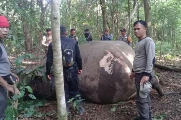 LAMPUNG POST | Dalam 7 Tahun, 26 Gajah Mati di Way Kambas