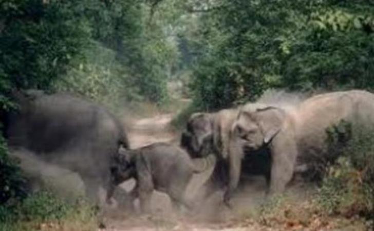 LAMPUNG POST | Tim Gabungan Halau Gerombolan Gajah Liar Kembali ke Hutan