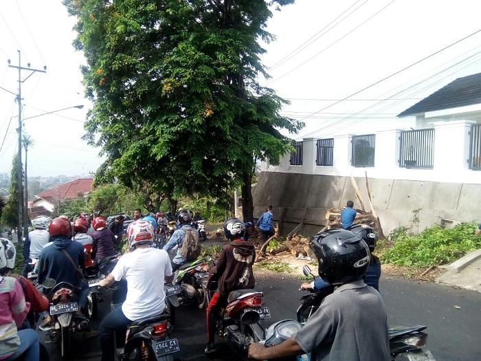 LAMPUNG POST | Hari Ini, Ada Dua Pohon Tumbang di Bandar Lampung
