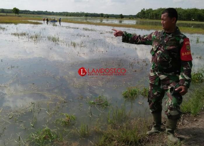 Dinas Pertanian Mesuji Data Lahan Sawah yang Terendam Banjir