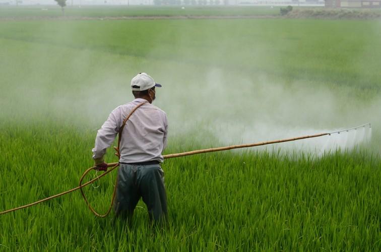 Dinas Pertanian MesujiTelurusi Herbisida Palsu