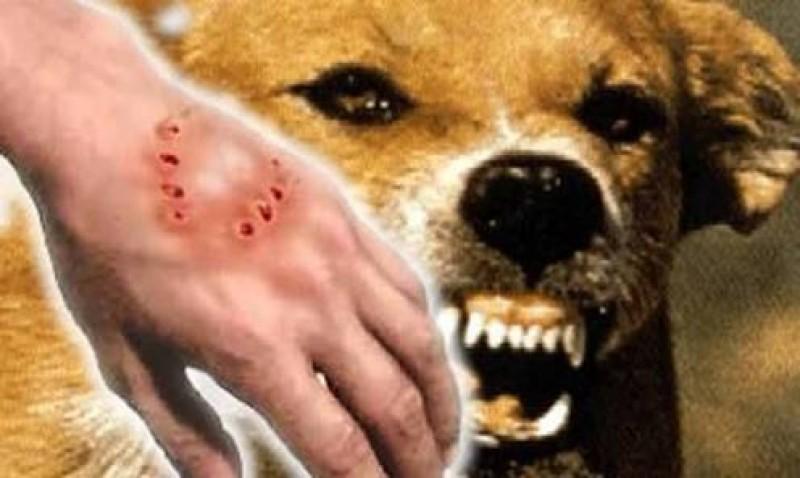 Distan Pesibar Rutin Lakukan Vaksinasi Hewan Penular Virus Rabies