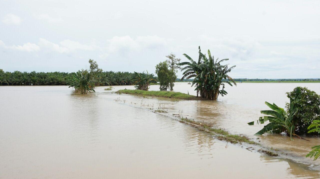 167 Hektare Tanaman Padi di Candipuro Terendam Banjir