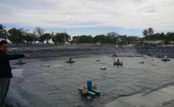 LAMPUNG POST | Pemkab Berkilah Perizinan Tambak Udang di Way Haru dari Pusat