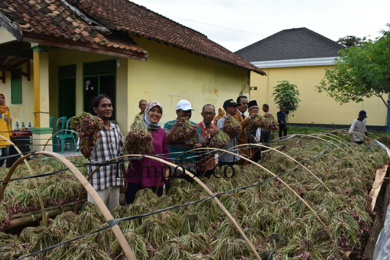 Kelompok Tani di Lampung Timur Panen Perdana Bawang Merah