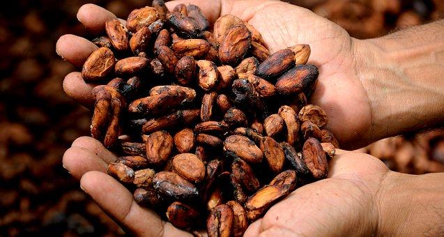 Harga Kakao di Lampura Relatif Stabil