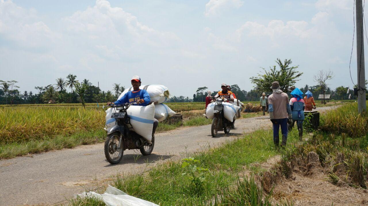 Petani Keluhkan Kelangkaan BBM Subsidi Buat Mesin Pertanian