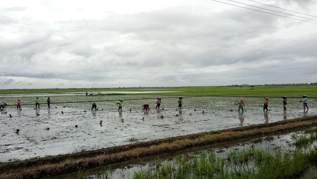 LAMPUNG POST | Intensitas Hujan Tinggi, Petani di Palas Was-was Banjir
