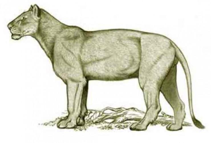 Feses Puma Prasejarah