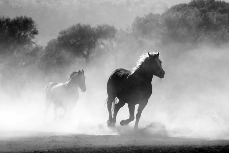 Gara-Gara Kuda