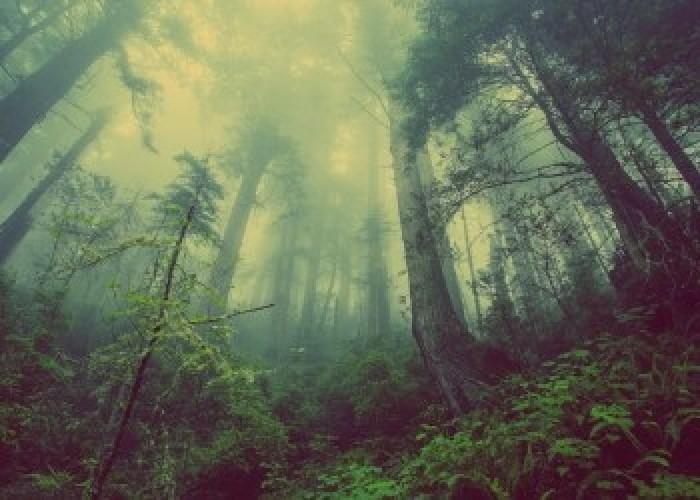 Hutan Tertua