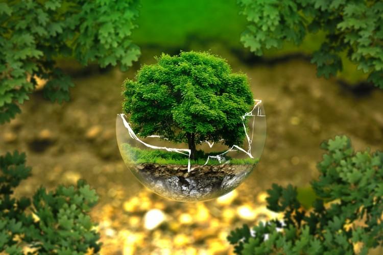 Kehidupan Awal Bumi