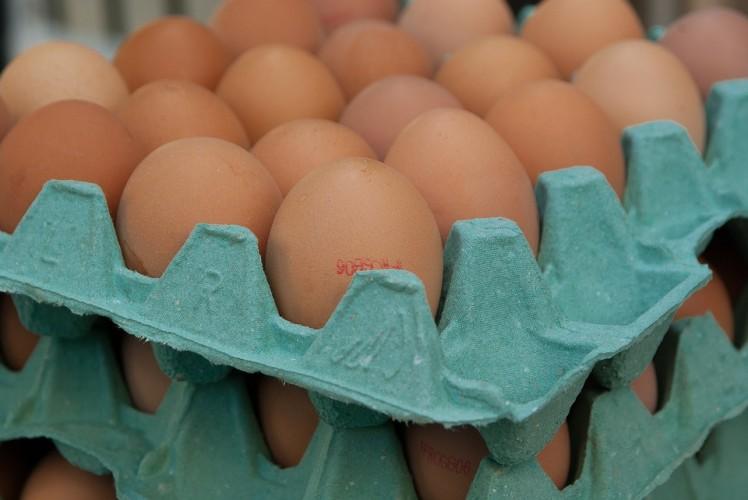 Kendalikan Harga Telur Ayam