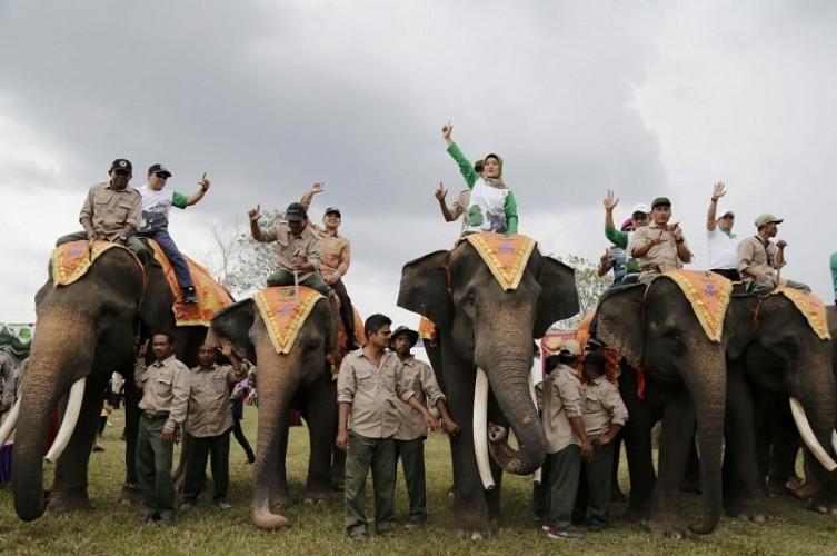 Napak Tilas Jejak Gajah di Lampung