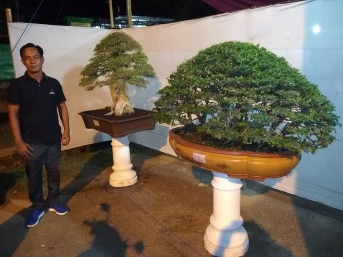 Pameran Bonsai Di Pringsewu Expo Sedot Animo Warga Lampost Co