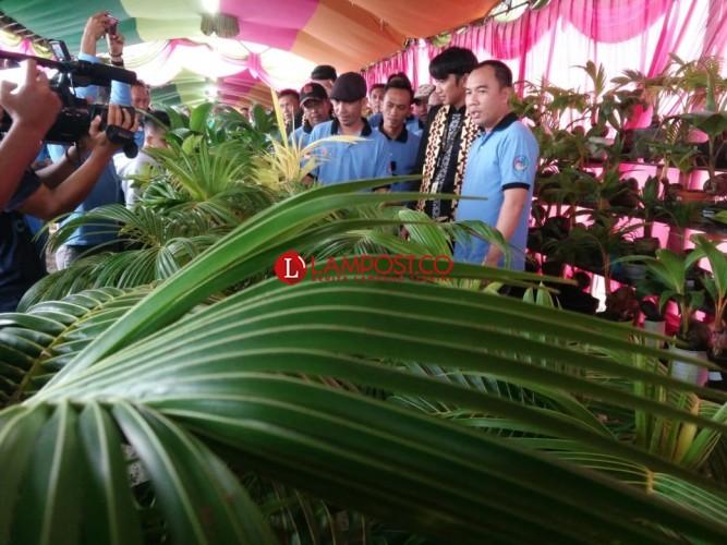 Pameran Bonsai Kelapa Hias di Way Kanan Raih Muri