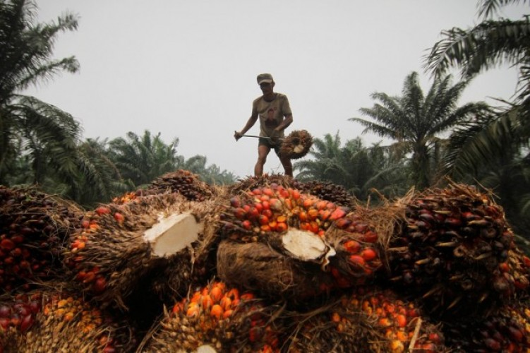 Pasar Sawit Afrika Bakal Gantikan Eropa