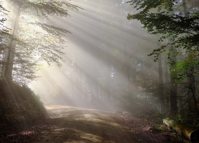 Pemerintah Klaim MoratoriumHingga Restorasi Gambut Tekan Deforestasi