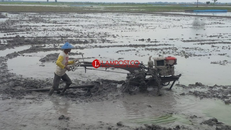 Petani Palas Keluhkan Ketersediaan Air Yang Semakin Menipis