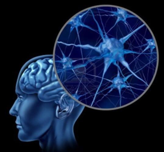Produksi Sel Otak Manusia