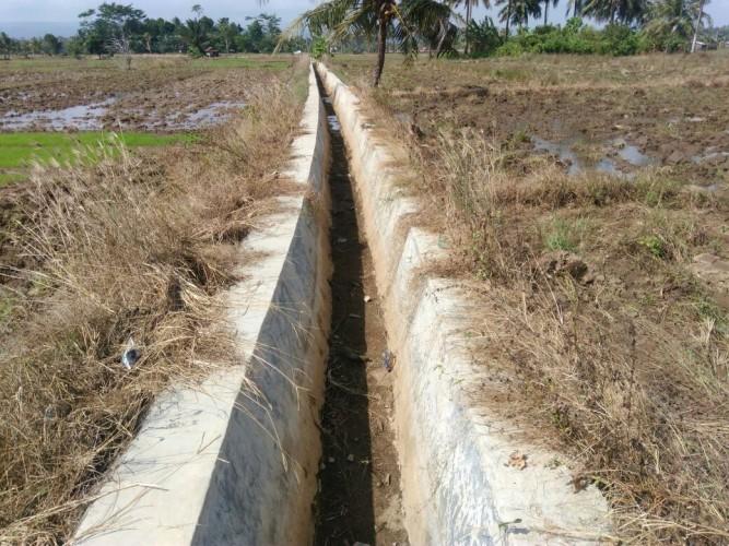 Puluhan Hektare Sawah Di Pesisir Barat Kekurangan Air