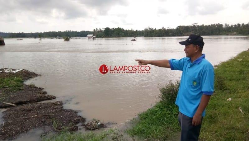 Sawah Gagal Panen Akibat Banjir di Palas Bertambah Jadi 210 Hektare