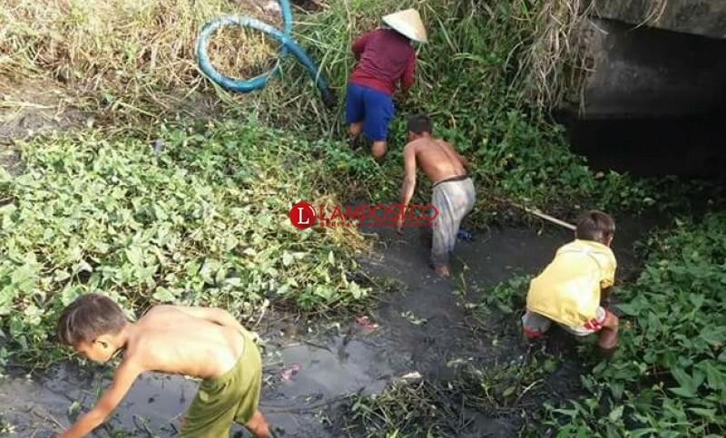 Selamatkan Padi dari Kekeringan, Rohadi Terpaksa Rogoh Kocek Jutaan Rupiah