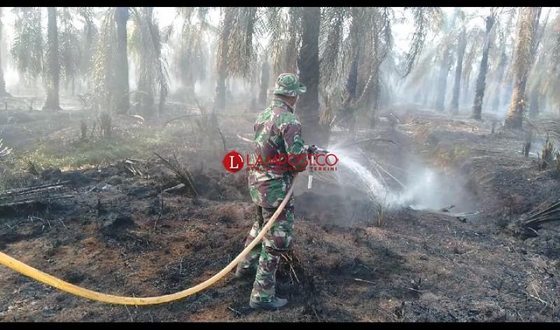 Hanguskan 70 Hektare Lahan BSMI, Api Berhasil Dipadamkan