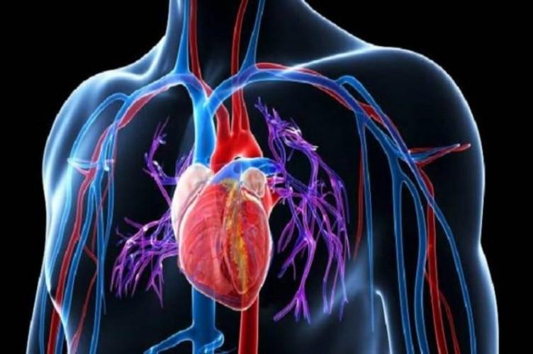 Suplemen dan Kesehatan Jantung
