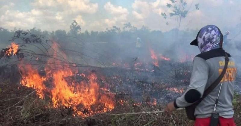 Lampung akan <i>All-out</i> Jinakkan Kebakaran Hutan