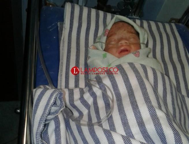 Warga Pesawaran Temukan Bayi dalam Kardus Saat Teduh di Bawah Pohon